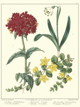 Gardener's Delight VIII by Sydenham Teast Edwards