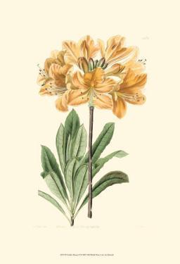 Golden Beauty II by Sydenham Teast Edwards