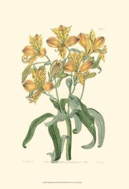 Golden Beauty III by Sydenham Teast Edwards