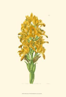 Golden Beauty IV by Sydenham Teast Edwards