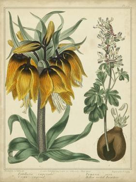 Golden Crown Imperial by Sydenham Teast Edwards