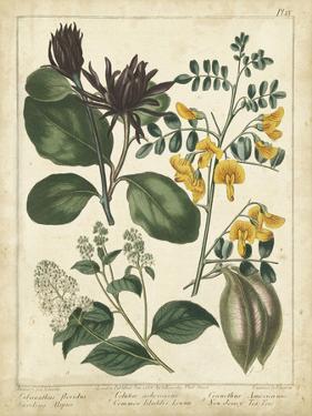 Non-Embellish Enchanted Garden I by Sydenham Teast Edwards