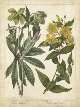 Non-Embellish Enchanted Garden III by Sydenham Teast Edwards