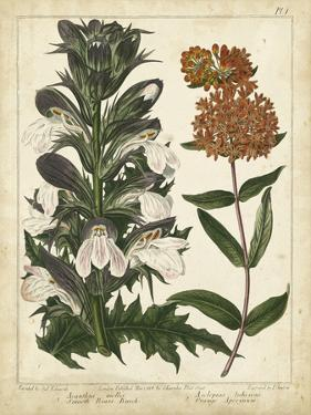Non-Embellish Enchanted Garden IV by Sydenham Teast Edwards