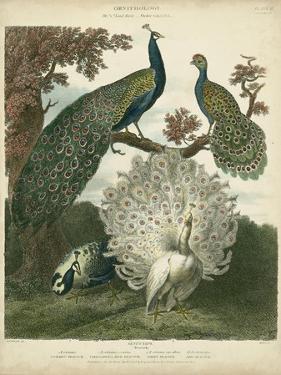 Peacock Gathering by Sydenham Teast Edwards