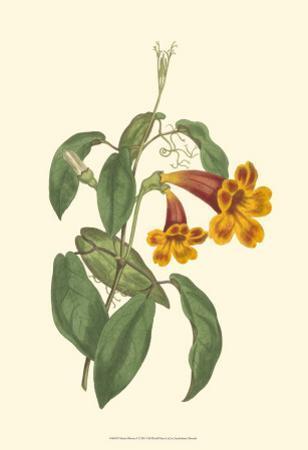 Vibrant Blooms I by Sydenham Teast Edwards