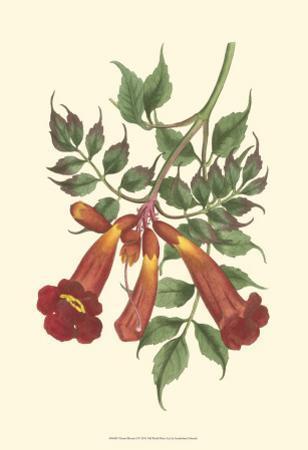 Vibrant Blooms II by Sydenham Teast Edwards