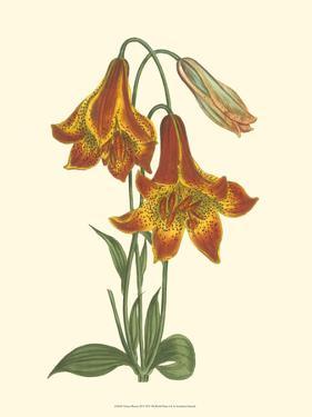 Vibrant Blooms III by Sydenham Teast Edwards