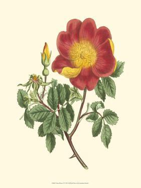 Vibrant Blooms IV by Sydenham Teast Edwards