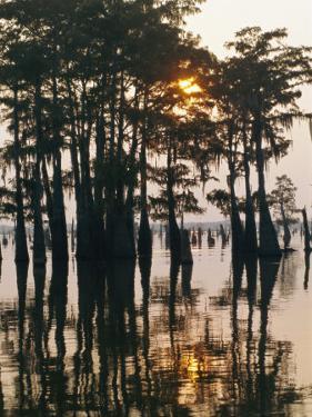 Atchafalaya Swamp, 'Cajun Country', Louisiana, USA by Sylvain Grandadam