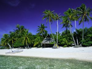 Beach and Palm Trees, Tahiti, Society Islands, French Polynesia, South Pacific Islands, Pacific by Sylvain Grandadam