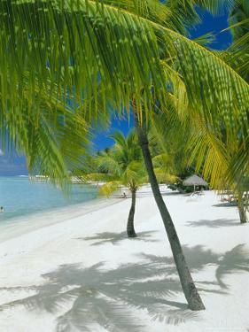 Beach, Bora Bora (Borabora), Society Islands, French Polynesia, South Pacific Islands, Pacific by Sylvain Grandadam
