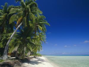 Beach, Rangiroa Atoll, Tuamotu Archipelago, French Polynesia, South Pacific Islands, Pacific by Sylvain Grandadam