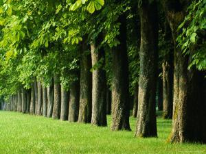 Line of Trees, Touraine, Centre, France, Europe by Sylvain Grandadam