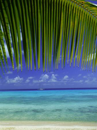 Palm Frond and Beach, Rangiroa Atoll, Tuamotu Archipelago, French Polynesia, South Pacific Islands