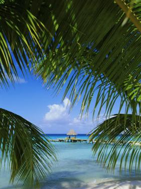 Palm Fronds and Beach, Rangiroa Atoll, Tuamotu Archipelago, French Polynesia, South Pacific Islands by Sylvain Grandadam