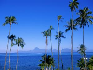 Palm Trees and Island, Tahiti, Society Islands, French Polynesia, South Pacific Islands, Pacific by Sylvain Grandadam