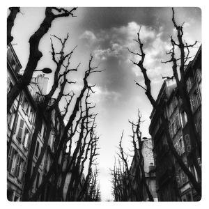 Avenue, 2015 by Sylver Bernat