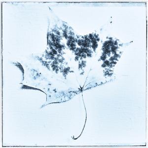 The blue leaf, 2015 by Sylver Bernat