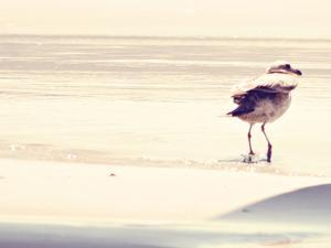 Bird at The Beach by Sylvia Coomes