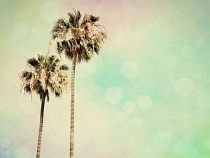 Palm Trees I by Sylvia Coomes