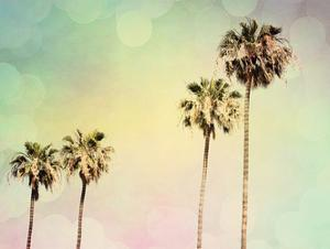 Palm Trees II by Sylvia Coomes