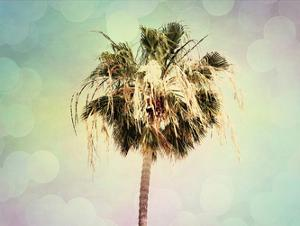 Palm Trees III by Sylvia Coomes