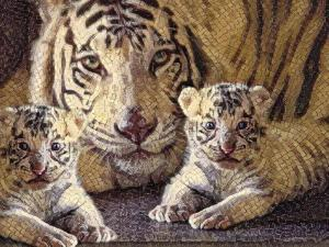Tiger Mother & Baby by sylvia pimental