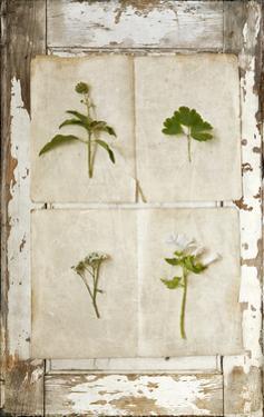Botanical Board 1 by Symposium Design
