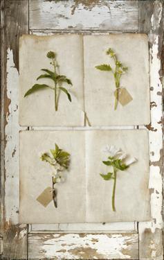 Botanical Board 2 by Symposium Design