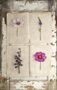 Botanical Board 4 by Symposium Design