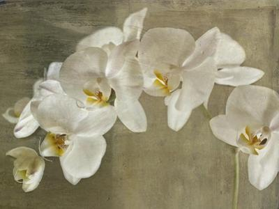 Painted Orchid by Symposium Design