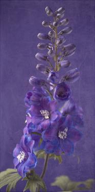 Purple Foxgloves 1 by Symposium Design