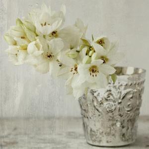 Silver Vase by Symposium Design