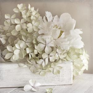 White Flower Book by Symposium Design