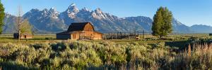 T. A. Moulton Barn in field, Mormon Row, Grand Teton National Park, Wyoming, USA