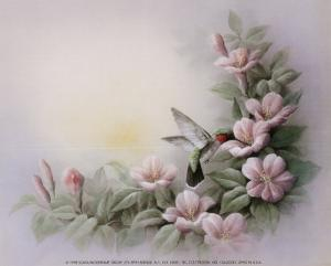 Hummingbird and Hibiscus by T. C. Chiu