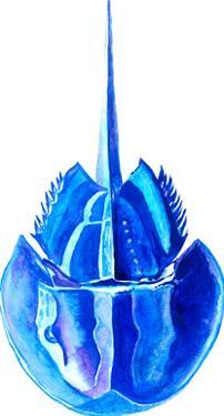 Blue Horseshoe Crab by T.J. Heiser