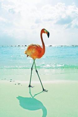 Flamingo on the Beach by Tai Prints