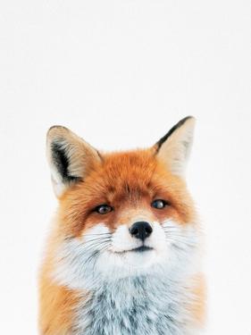 Fox by Tai Prints