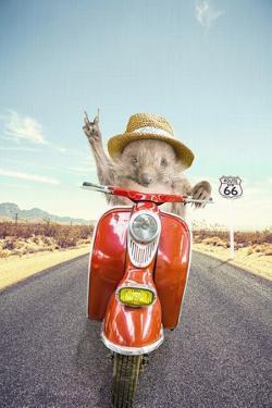 Hedgehog Traveler by Tai Prints
