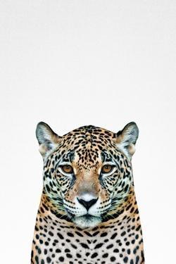 Leopard II by Tai Prints