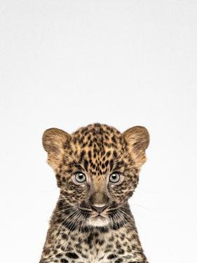 Leopard by Tai Prints