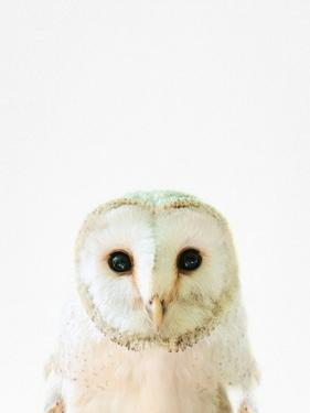 Owl by Tai Prints