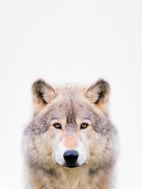 Wolf by Tai Prints