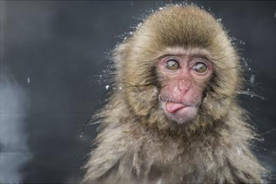 Snow Money, Tongue Out by Takeshi Marumoto