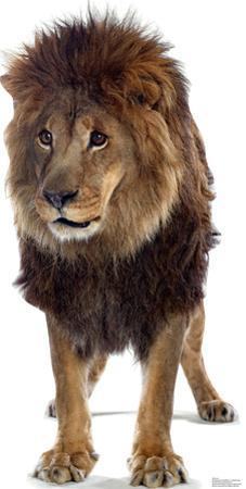 Talking Lion Lifesize Standup