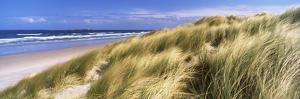 Tall Grass on the Beach, Bamburgh, Northumberland, England