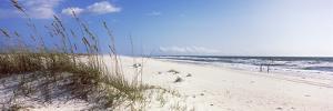 Tall Grass on the Beach, Perdido Key Area, Gulf Islands National Seashore, Pensacola, Florida, USA