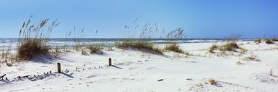 https://imgc.allpostersimages.com/img/posters/tall-grass-on-the-beach-perdido-key-area-gulf-islands-national-seashore-pensacola-florida-usa_u-L-PNVLTT0.jpg?p=0